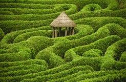 Labyrinthe étonnant Photos stock