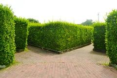 Labyrinthgarten im Park stockfotografie
