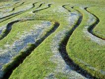 Labyrinthmuster im Gras Stockfoto