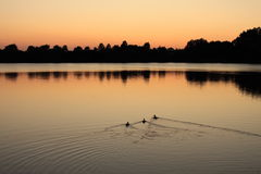 Lac à la soirée 1 Photo stock