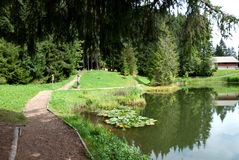 lac Швейцария joncs des Стоковая Фотография RF