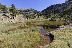 Lac Achard banks. Lac Achard, in Chamrousse mountain range Royalty Free Stock Photography