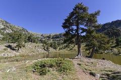 Lac Achard tree. Lac Achard, in Chamrousse mountain range Royalty Free Stock Photography