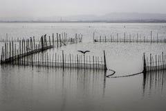 Lac Albufera, Valence, Espagne Images stock