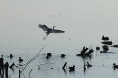 Lac ana Sagar dans Ajmer Photographie stock