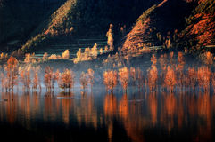 Lac ardent 1 images stock