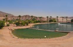 Lac artificiel en parc de Timna, désert du Néguev, Israël Photographie stock libre de droits