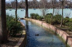 Lac au centre du parc de Madrid avec un canard et plusieurs canoës dans l'eau images stock