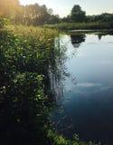Lac au coucher du soleil, aux arbres et à la réflexion d'herbe dans l'eau Photos stock