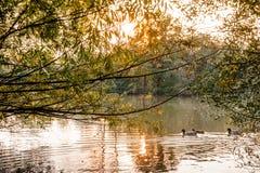 Lac au coucher du soleil avec des canards Photos stock