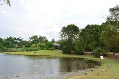 Lac au jardin botanique de Singapour photographie stock libre de droits