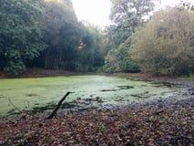 Lac au milieu du Forrest Image stock