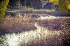 Lac au printemps Photos stock