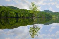 Lac au printemps Photographie stock
