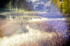 Lac au printemps en parc de ville Images stock
