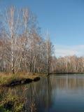 Lac autumn - arbres de birh Image stock