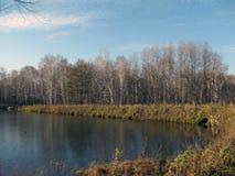Lac autumn - arbres de birh Photographie stock