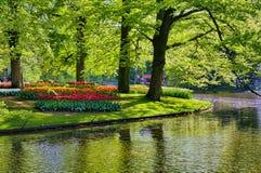 Lac avec de beaux cygnes blancs en parc de Keukenhof, Lisse, Hollande Photographie stock libre de droits
