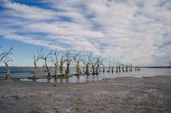 Lac avec des arbres Images stock