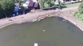 Lac avec des cygnes et des canards dans l'eau banque de vidéos
