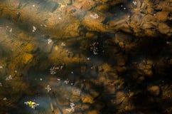 Lac avec des fleurs photos libres de droits