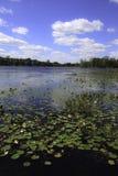 Lac avec des garnitures de lis Photos libres de droits