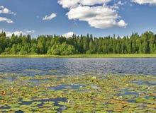 Lac avec des lis d'eau Image stock