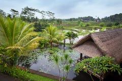 Lac avec des nénuphars et une hutte avec un toit couvert de chaume image stock