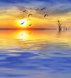 Lac avec des oiseaux Photos stock