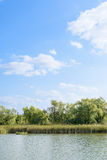 Lac avec des roseaux Image stock