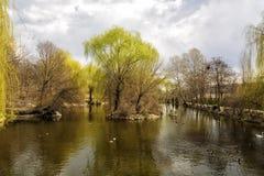 Lac avec différents oiseaux Images libres de droits