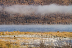 Lac avec la brume pendant le matin Photo stock