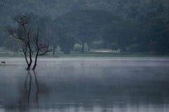 lac avec le soleil Image libre de droits