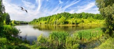 Lac avec les arbres verts sur le rivage et l'oiseau en ciel image stock