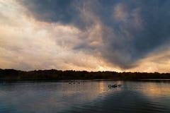 Lac avec les nuages, le cygne de mère et le jeune cygne dramatiques Photos stock