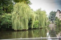 Lac avec les saules pleurants dans le château dans la ville de Detmold Photo stock