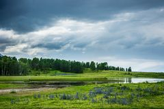 Lac avec un pêcheur et des fleurs images stock
