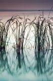 Lac Balaton photos stock