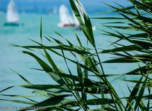 Lac Balaton Photos libres de droits