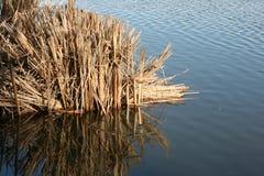 Lac Balboa Photos stock