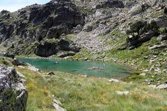 Lac barbs Image libre de droits