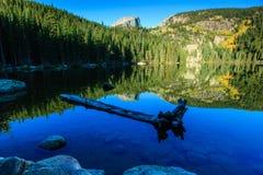 Lac bear Photographie stock libre de droits