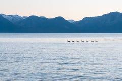 Lac bleu avec la silhouette des canards nageant à travers Photographie stock libre de droits