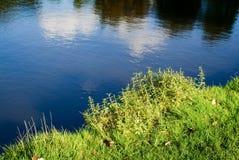 Lac bleu avec les plantes vertes à côté de lui Photo stock