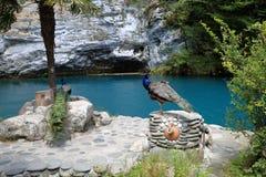 Lac blue de paon Photos stock