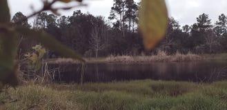 Lac boisé avec Gass, feuilles, et un sentiment d'automne photo libre de droits