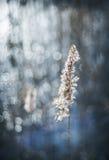 Lac brillant Image libre de droits