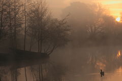 Lac brumeux calme au lever de soleil photographie stock