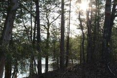 Lac caché dans les bois images stock