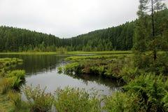 Lac Canario forest sur l'île de San Miguel Photographie stock